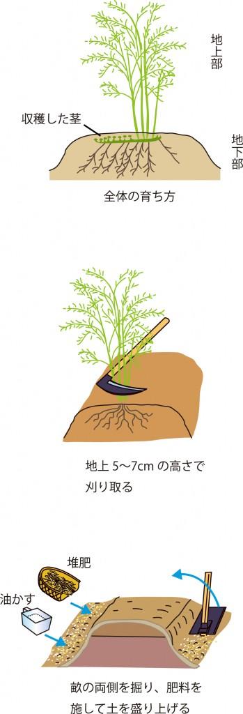 p25_11saien_4c