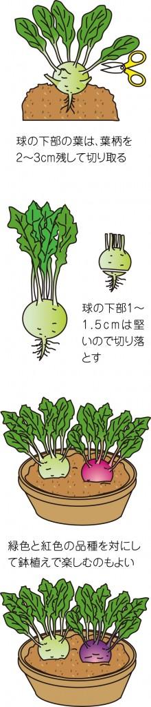 p25_05saien_4c