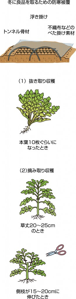 p25_09saien_4c
