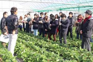 九州大学の学生が柳川市をフィールドワーク
