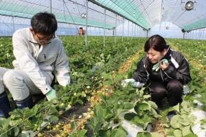 新入職員農家実習