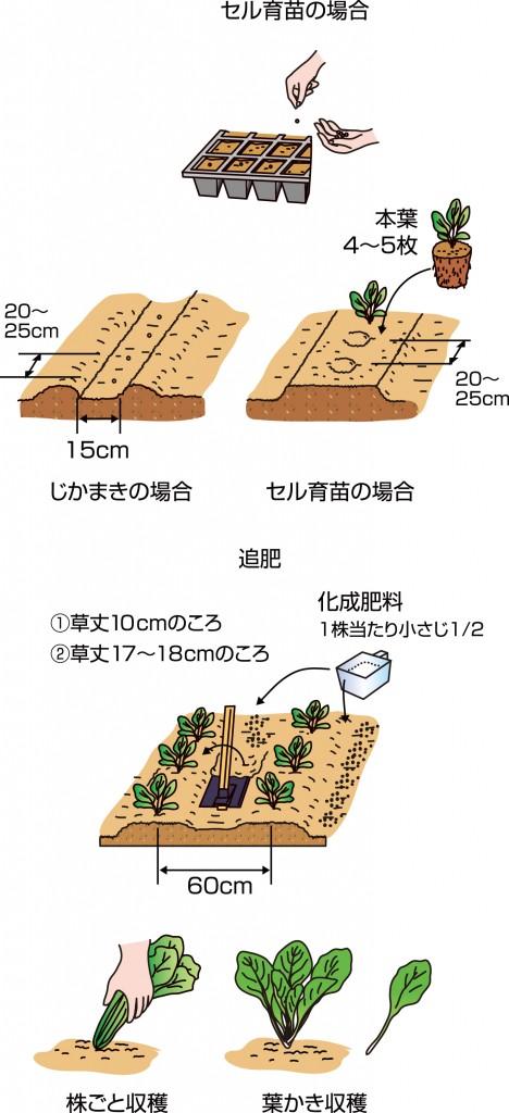 p25_03saien_4c