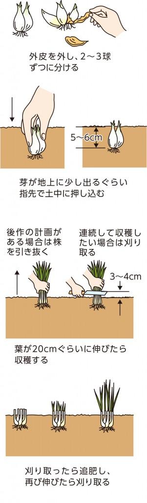 p25_07saien_4c