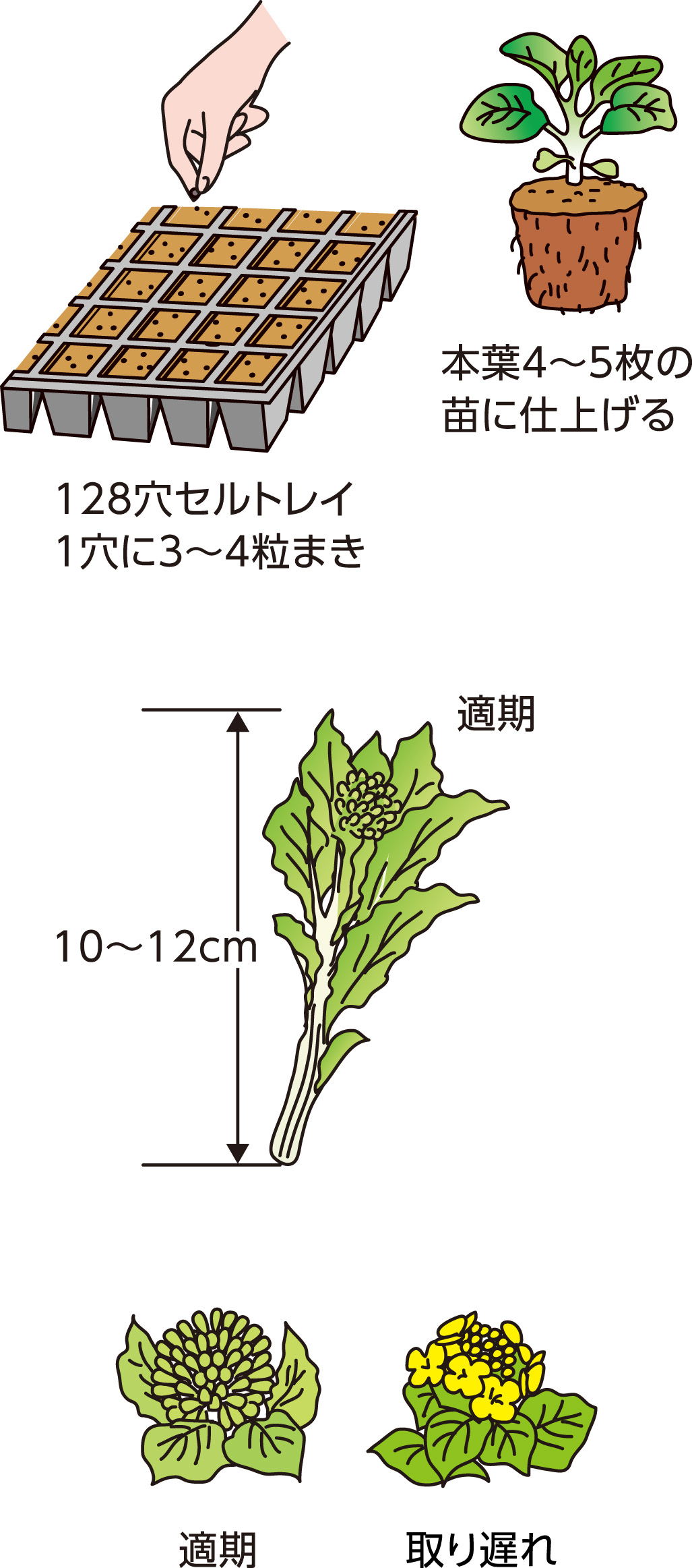 p25_08saien_4c