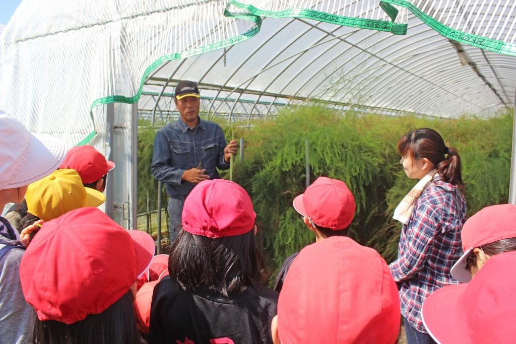 アスパラ収穫で職場体験2