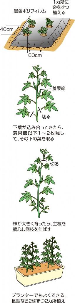p26_03saien_4c