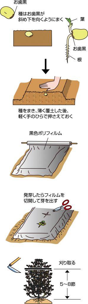 p23_09saien_4c