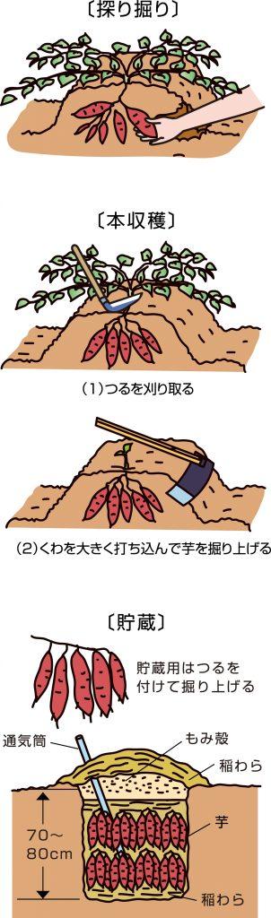 p23_10saien_4c